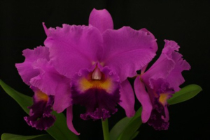 Lc. South Esk 'Catherine'