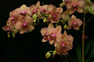 General Orchid Culture