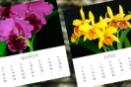 Monthly Orchid Checklists and Newsletters