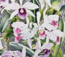 Mike May, Art for Orchids