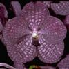 January in Your Orchid Collection