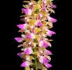 March in Your Orchid Collection