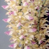 June in Your Orchid Collection