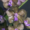 September in Your Orchid Collection