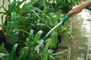 Should You Prewater Your Orchids Before Applying Fertilizer?