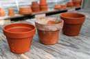 Disinfect Clay Pots with Bleach and Run Through Dishwasher