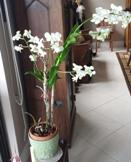 Orchid Too Big for Space